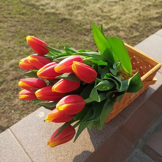 15 крупных тюльпанов в корзинке