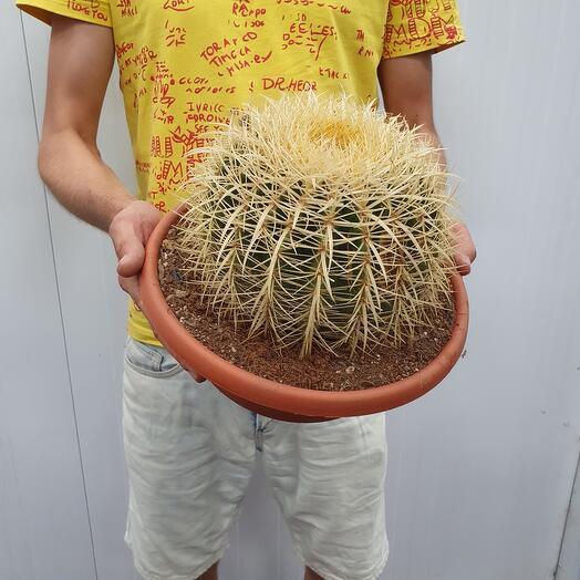 """Cactus """"Gruzoni"""""""