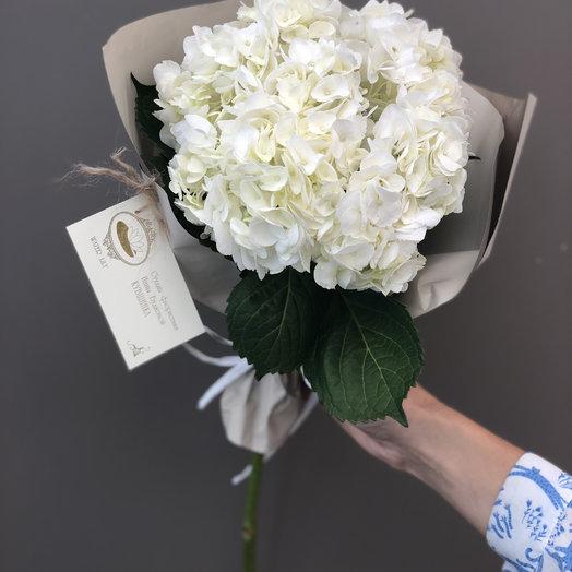 Гортензия моно: букеты цветов на заказ Flowwow