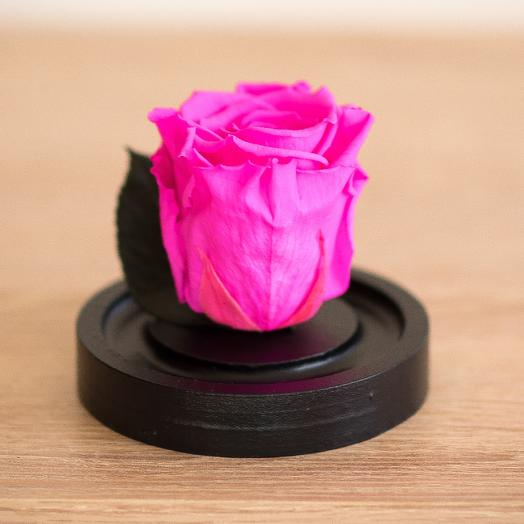 Роза в колбе Микро амарантовый маджента