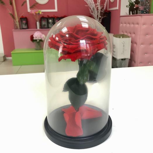 Живая роза в колбе: букеты цветов на заказ Flowwow