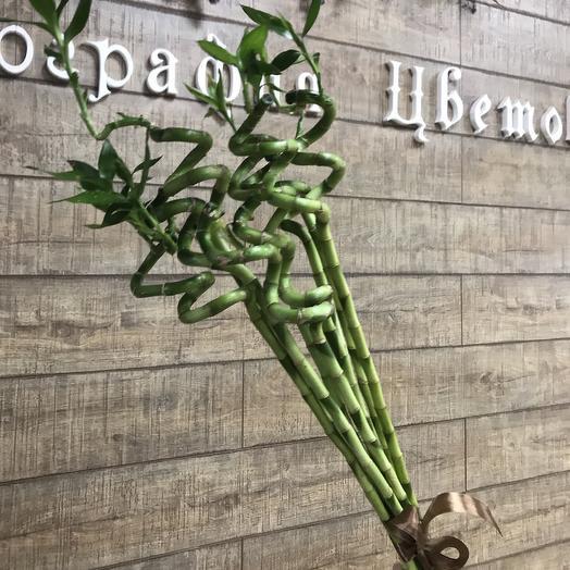 Бамбук на счастье: букеты цветов на заказ Flowwow