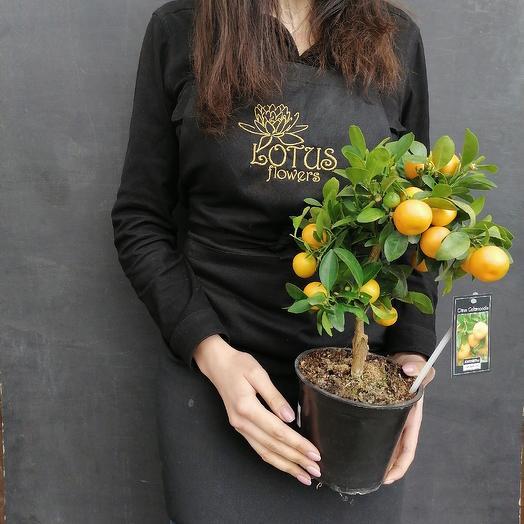 Мандаринка: букеты цветов на заказ Flowwow