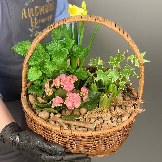 Микс луковичных, комнатных и садовых растений в корзинке