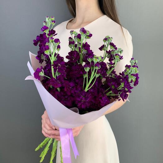 Фиолетовая маттиола