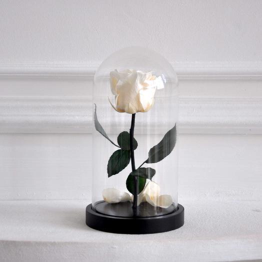 Роза в колбе мини Белоснежка: букеты цветов на заказ Flowwow