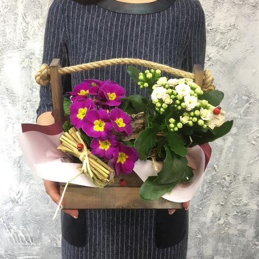 Композиция из горшечной примулы и каланхое в ящике с природным декором: букеты цветов на заказ Flowwow