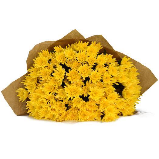 Желтые мохровые хризантемы