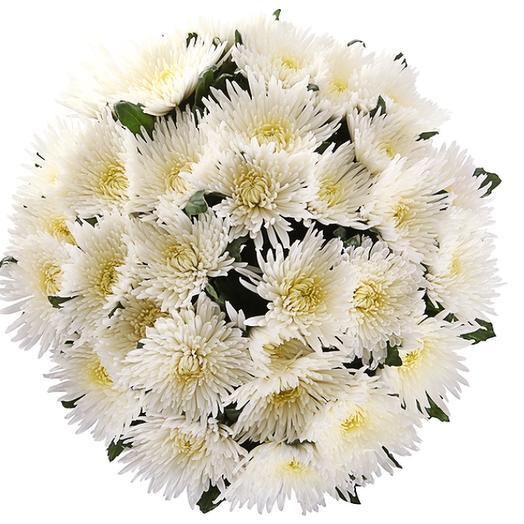 Хризантема анастасия: букеты цветов на заказ Flowwow