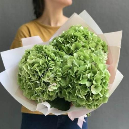 Букет зелёных бархатный гортензий