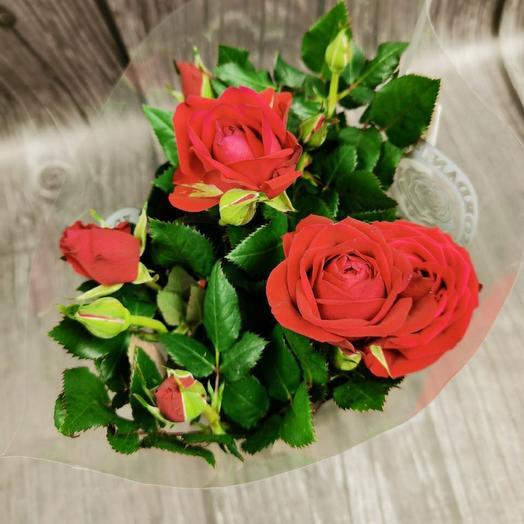 Красная роза в горшке