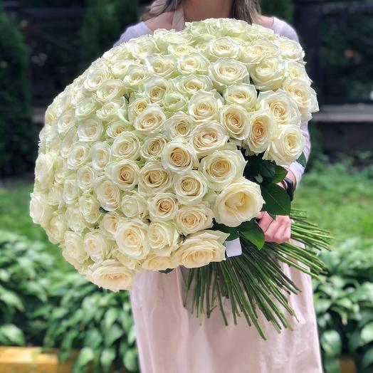 101 Роза Эквадор белая 60 см