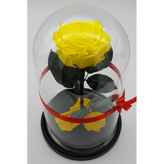 Роза в колбе премиум 7-8 Желтая 27*15*8см