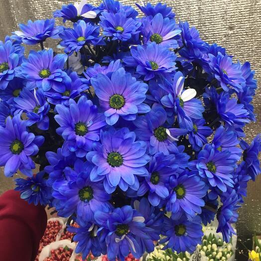 Бакарди синяя