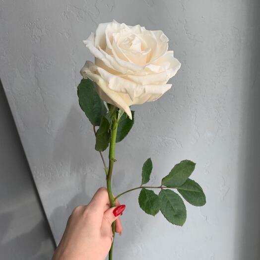 Розочка белая