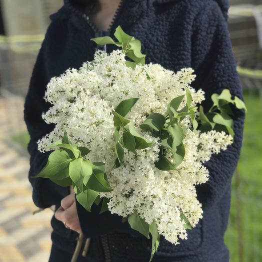 Белая сирень в букете: букеты цветов на заказ Flowwow