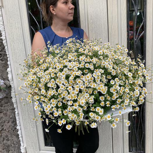 Огромны букет ромашек: букеты цветов на заказ Flowwow