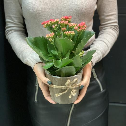 Розовая каланхоэ в деревянном кашпо: букеты цветов на заказ Flowwow