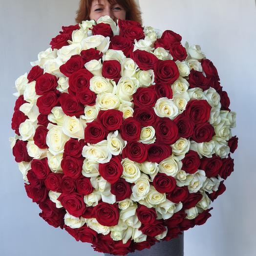 Огромный букет из 151 красных и белых роз