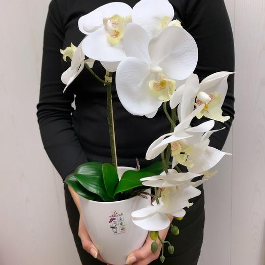 Орхидея 1 ствол: букеты цветов на заказ Flowwow