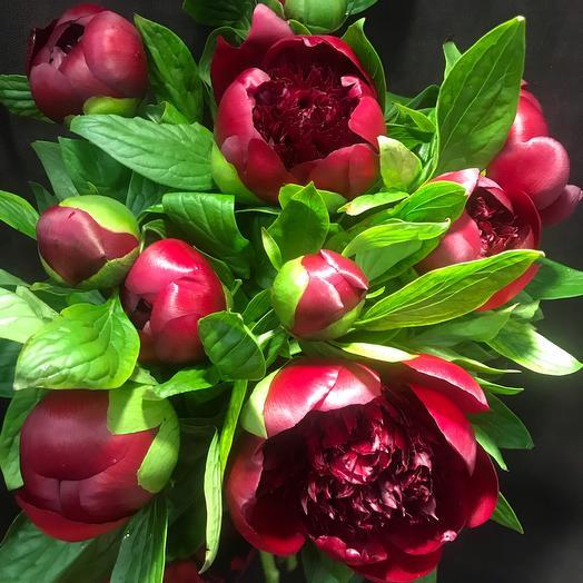 Пион: букеты цветов на заказ Flowwow