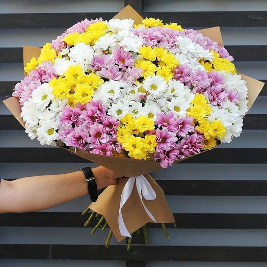 21 разноцветная хризантема
