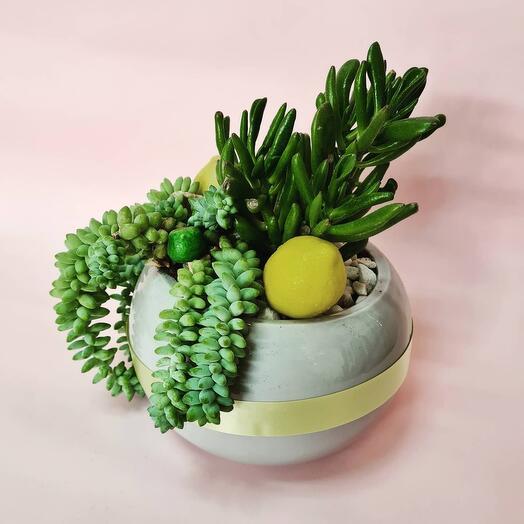 Композиция из комнатных неприхотливых растений в керамическом кашпо