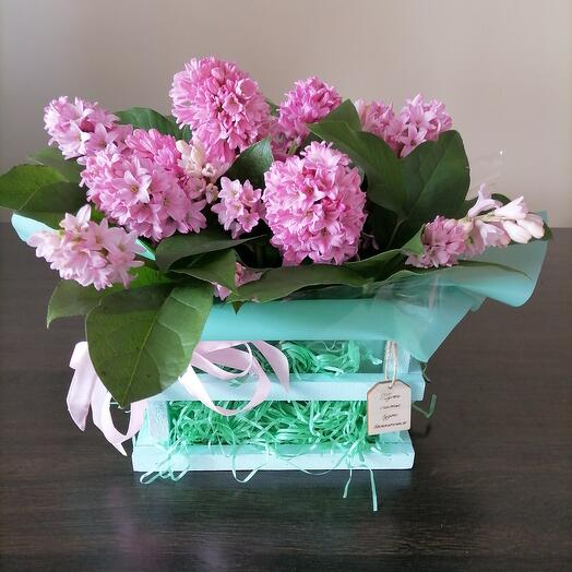 Hyacinths in a mint box