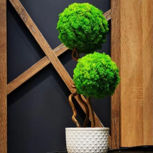 Декоративное деревце из мха