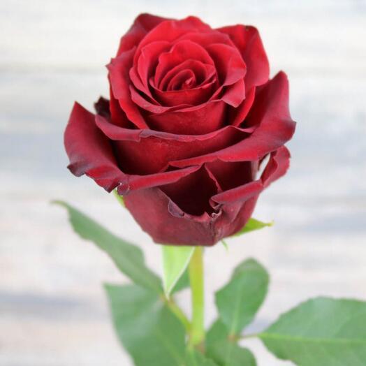 Роза Эквадор Эксплоер