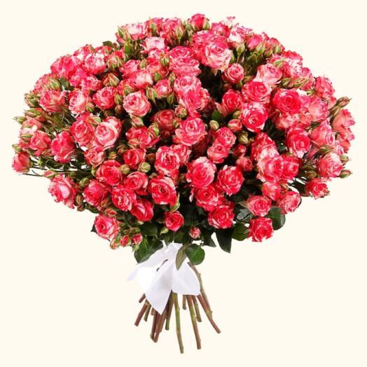 Роза кустовая fire flash 60 см