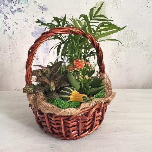 Корзина «золотая осень»: букеты цветов на заказ Flowwow