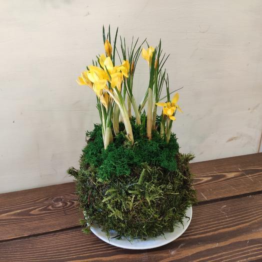 Кокедама CROCUS: букеты цветов на заказ Flowwow