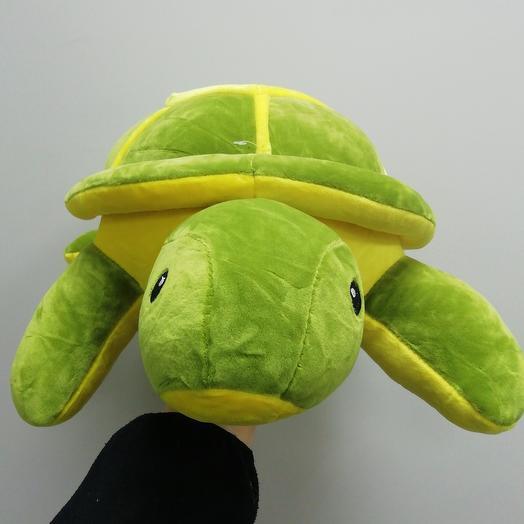 Turtle size M 🐢