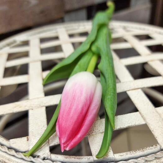 Тюльпан розовый 30 см. поштучно