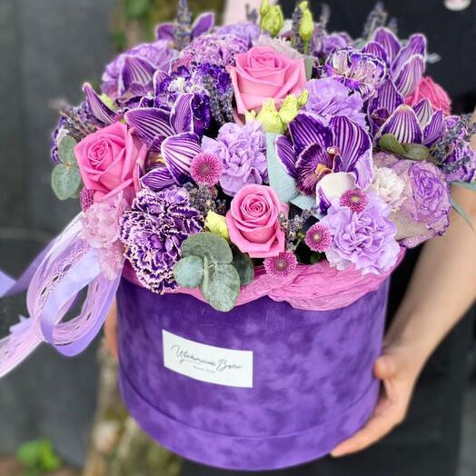 Фиолетов