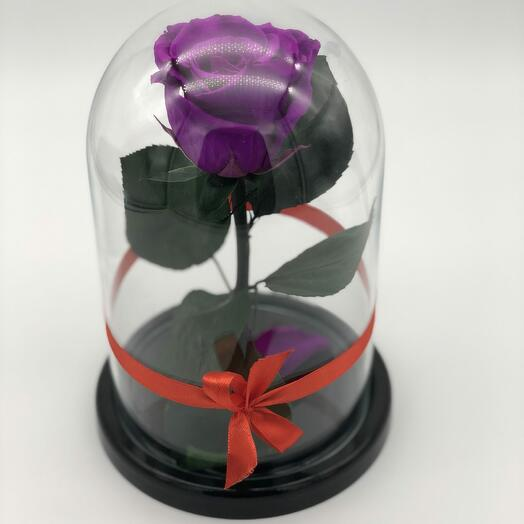 Роза в Стеклянно Колбе Фиолетовая Мини