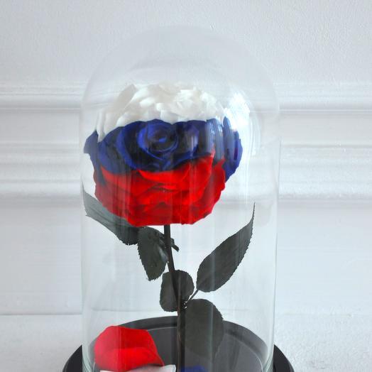 ТРИКОЛОР РОЗА В КОЛБЕ PREMIUM: букеты цветов на заказ Flowwow