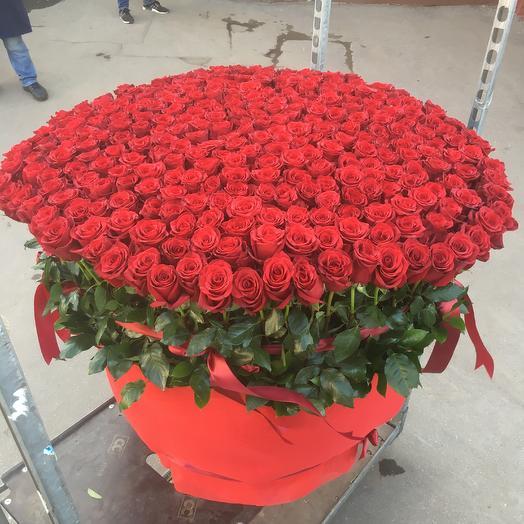 301 Эквадорская роза