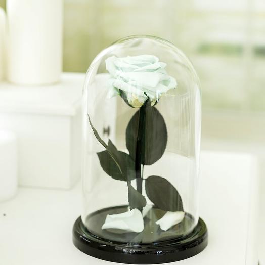 Роза в колбе «Premium» мятная