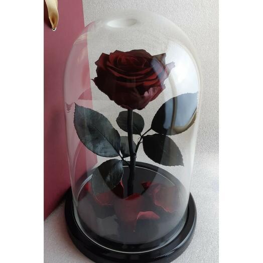 Роза в колбе премиум 7-8 Вишневая 27*15*8см