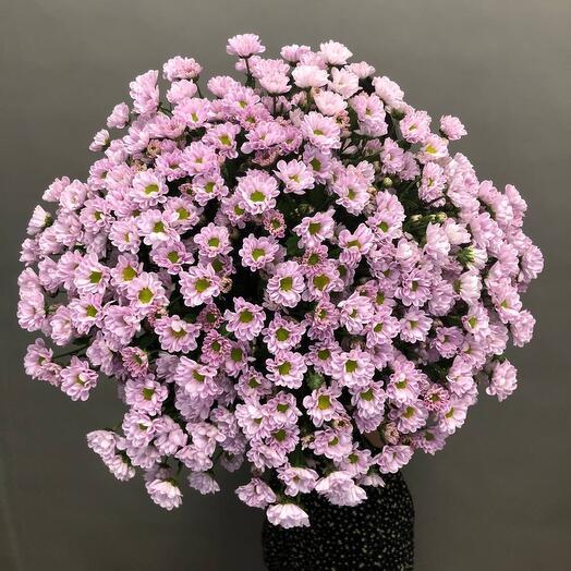 Букет из кустов хризантем Сантини лилового цвета