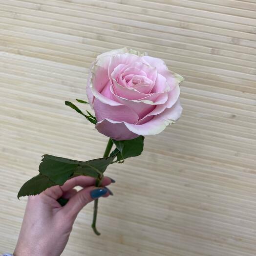 Роза Пинк Мондиаль 50 см