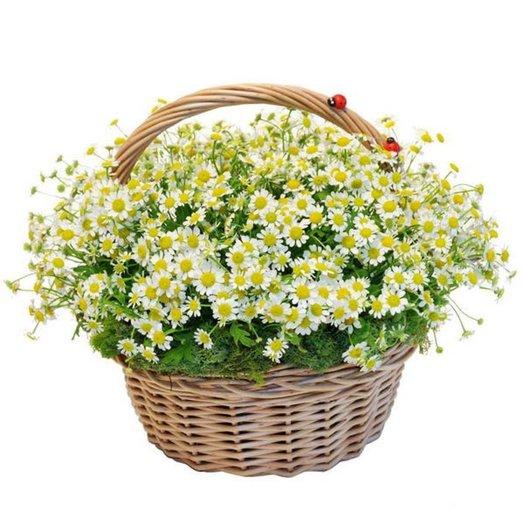 Корзина матрикарий: букеты цветов на заказ Flowwow