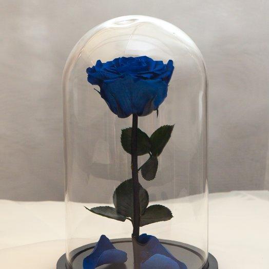 Роза в колбе RozaRose Медиум Синяя: букеты цветов на заказ Flowwow