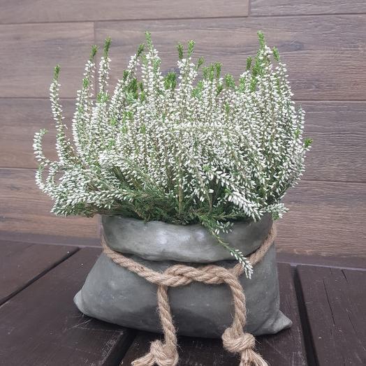 Вереск в горшочке из бетона: букеты цветов на заказ Flowwow