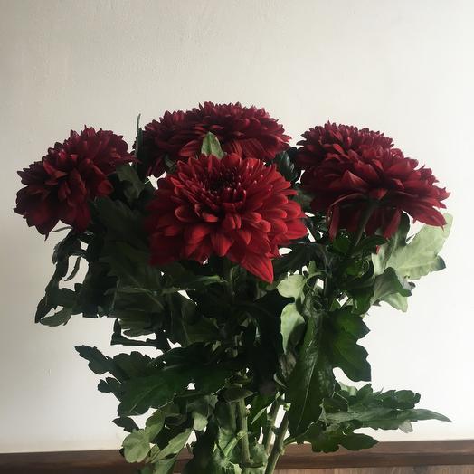 Хризантема  пип  под атласную  ленту: букеты цветов на заказ Flowwow