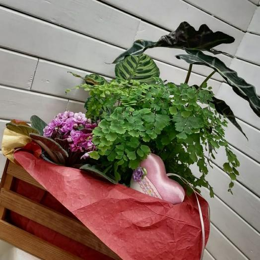 Ящик с розовой фиалкой и сердцем