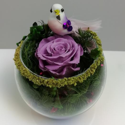 The bird on the rose