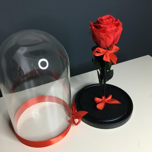 Роза красная в колбе (бутон до 6 см)